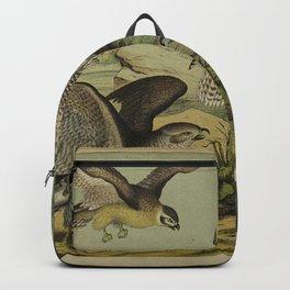 003 falco pygargus Common Buzzard Osprey or Australian Osprey Northern Goshawk Greenland Falcon falco islandicus10 Backpack
