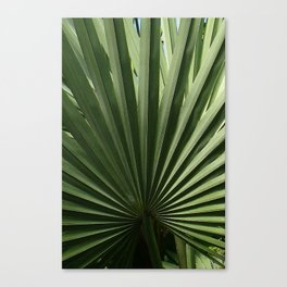 iPalm Canvas Print