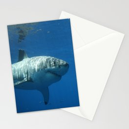 Great White Shark Smile Stationery Cards