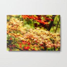 Japanese maples Metal Print