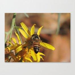 Desert Sunflower Pollen Picker Canvas Print