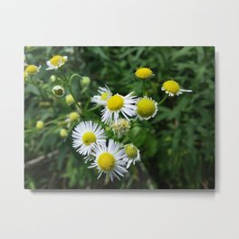 Daisies Blowing in the Wind Metal Print