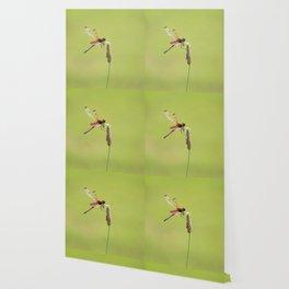 Blood Pennant Dragon Fly Wallpaper
