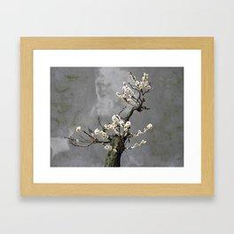 Blooming  bonsai Framed Art Print