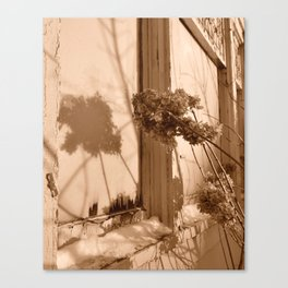 Winter Hydrangeas  Canvas Print