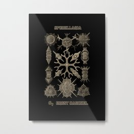 """Spumellaria"" from ""Art Forms of Nature"" by Ernst Haeckel Metal Print"