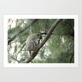 Monkey Itch Art Print