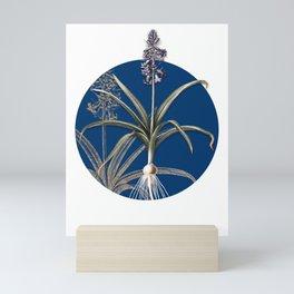Vintage Scilla Patula Botanical Illustration on Circle Mini Art Print