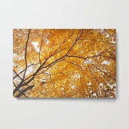 Autumn Skylight Metal Print
