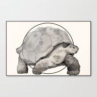tortoise Canvas Prints featuring Tortoise by Twentyfive