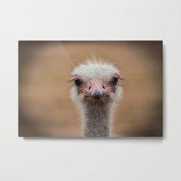 Common Ostrich portrait Metal Print