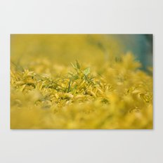 Yellow, Yellow, Super Fellow Canvas Print