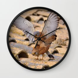Male and female of Lesser kestrel. Wall Clock