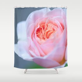 Forever in Love - Pink Rose #1 #decor #art #society6 Shower Curtain