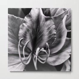 Beautiful Bauhinia at night Metal Print