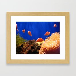 The world under the water Framed Art Print