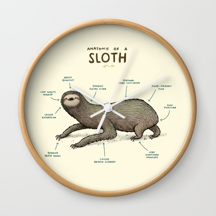 Anatomy of a Sloth