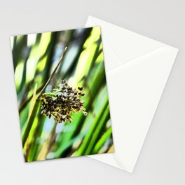 Summer Grass Seed Head Stationery Cards