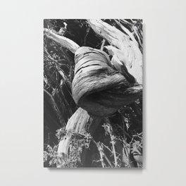 Gnarled Tree Metal Print