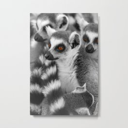 #Funny #Animals from #Madagascar Metal Print