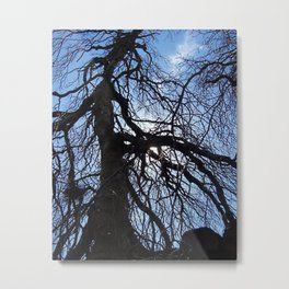 Nearly Abstract Tree on clear blue sky Metal Print