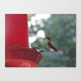 Hummingbird w/ bokeh Canvas Print