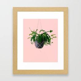kangaroo paw fern II Framed Art Print