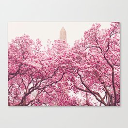 New York City - Central Park - Cherry Blossoms Canvas Print
