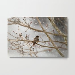 Robin Braving the Falling Snow Metal Print