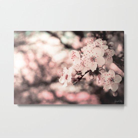 Sweet Spring (White Cherry Blossom) Metal Print