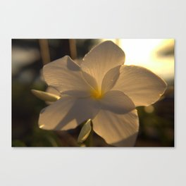 Sunrise on Flowers Canvas Print