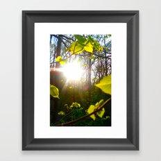 Sunlight Framed Art Print