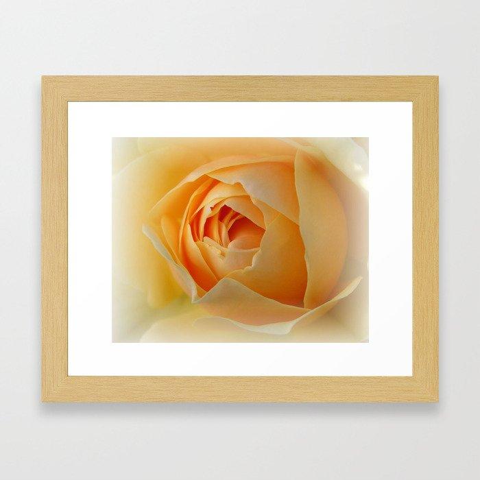 Yellow Graham Thomas Rose Framed Art Print