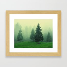 Beautiful green forest with tall trees in a foggy weather Framed Art Print