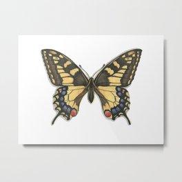 Butterflies: Old World Swallowtail Metal Print