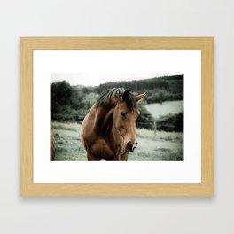 vintage horse animal painting art Framed Art Print