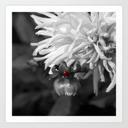Ladybug on a Dahlia Bud-B&W with red ladybug Art Print