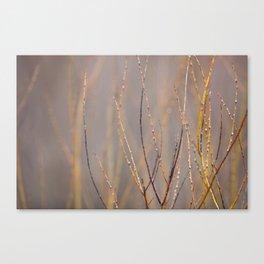 Canadian Prairies 1 Canvas Print