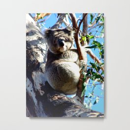 Koala Watching Metal Print
