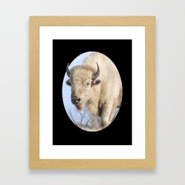 Emerging White Bison  Framed Art Print