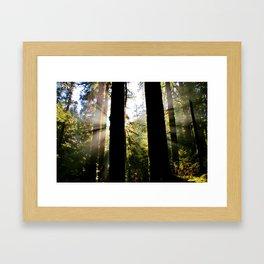 Rainforest Sun Rainbow Framed Art Print