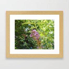 Hummingbee Framed Art Print
