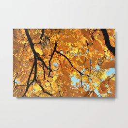Glorious Golden Hickory Metal Print