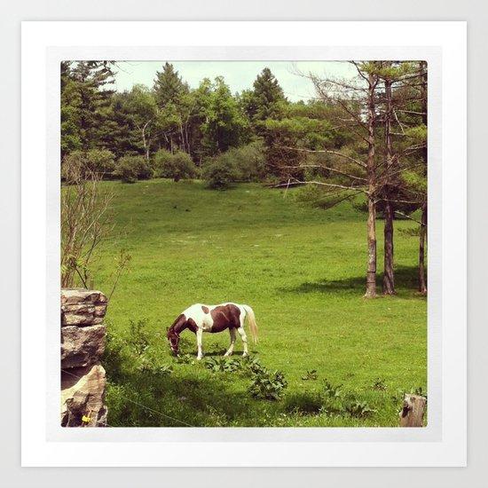 Horse in a Spring Field in Connecticut Art Print