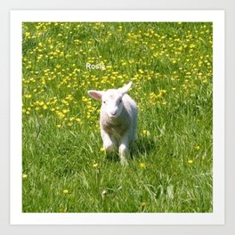 Rosie the Lamb Photography Art Print