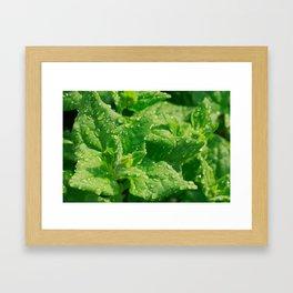 Spinach leaves Framed Art Print