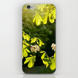 Flowering Aesculus horse chestnut foliage iPhone Skin