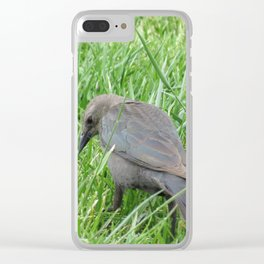 Beautful Little  Bird at Jensen NaturePark Clear iPhone Case