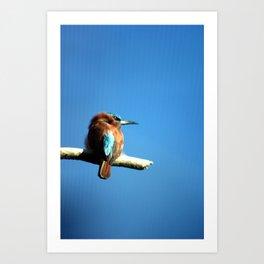 Bee-eater Art Print