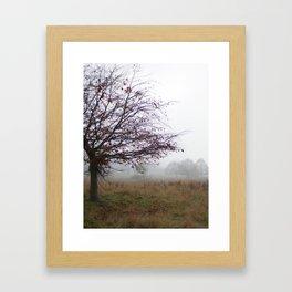 Tree in the mist Framed Art Print